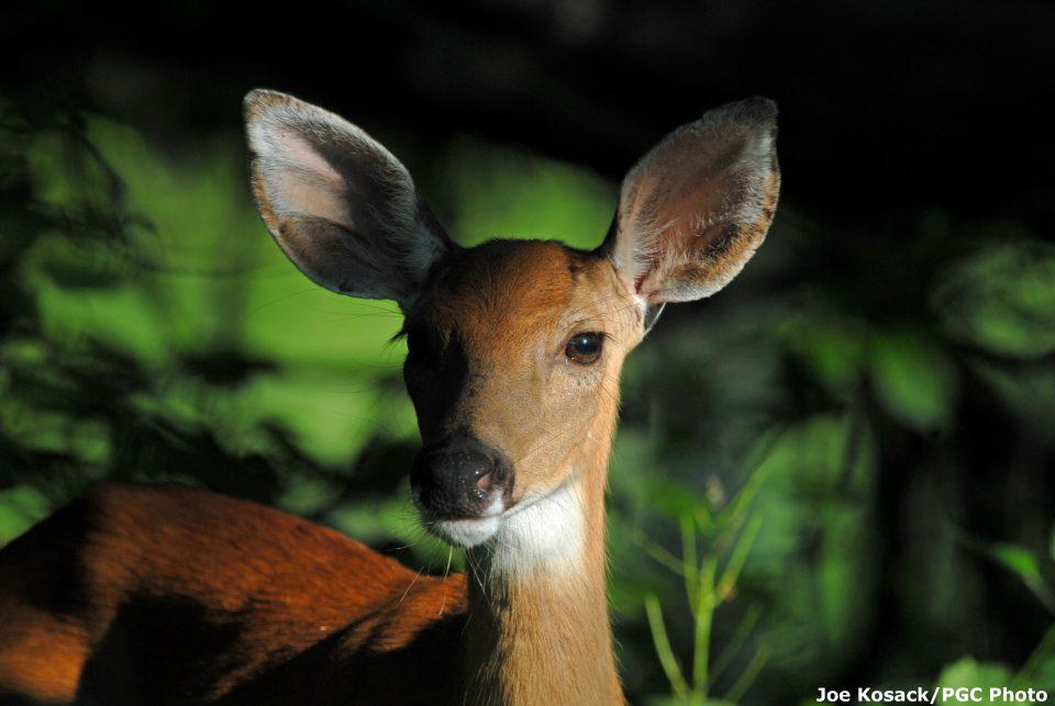 PSU Deer Forest Blog