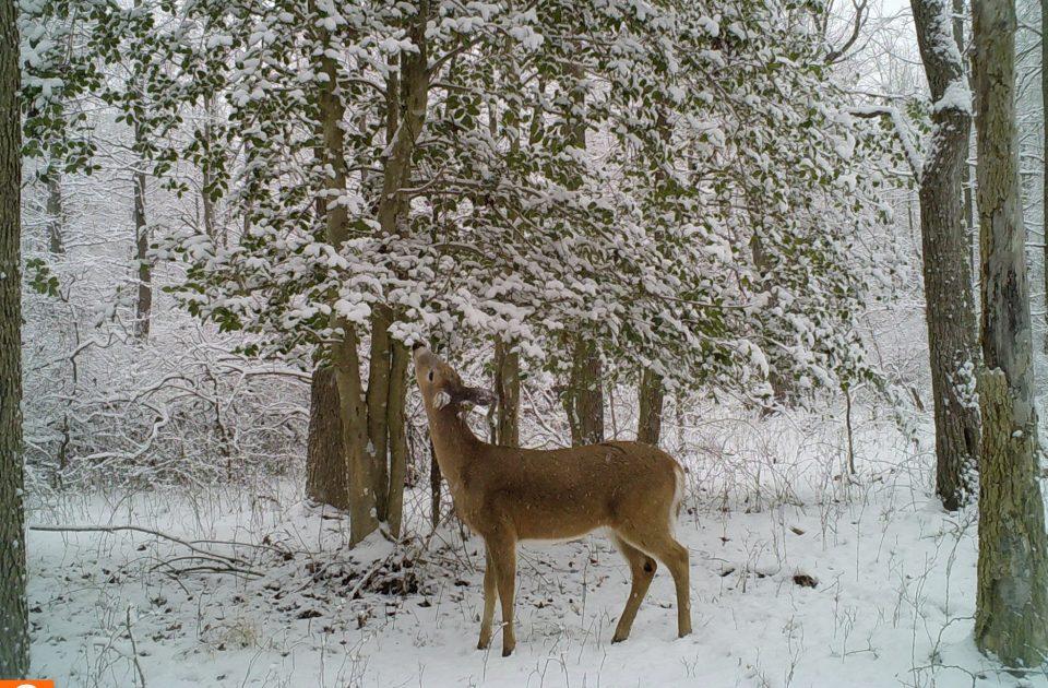 PSU Deer Study