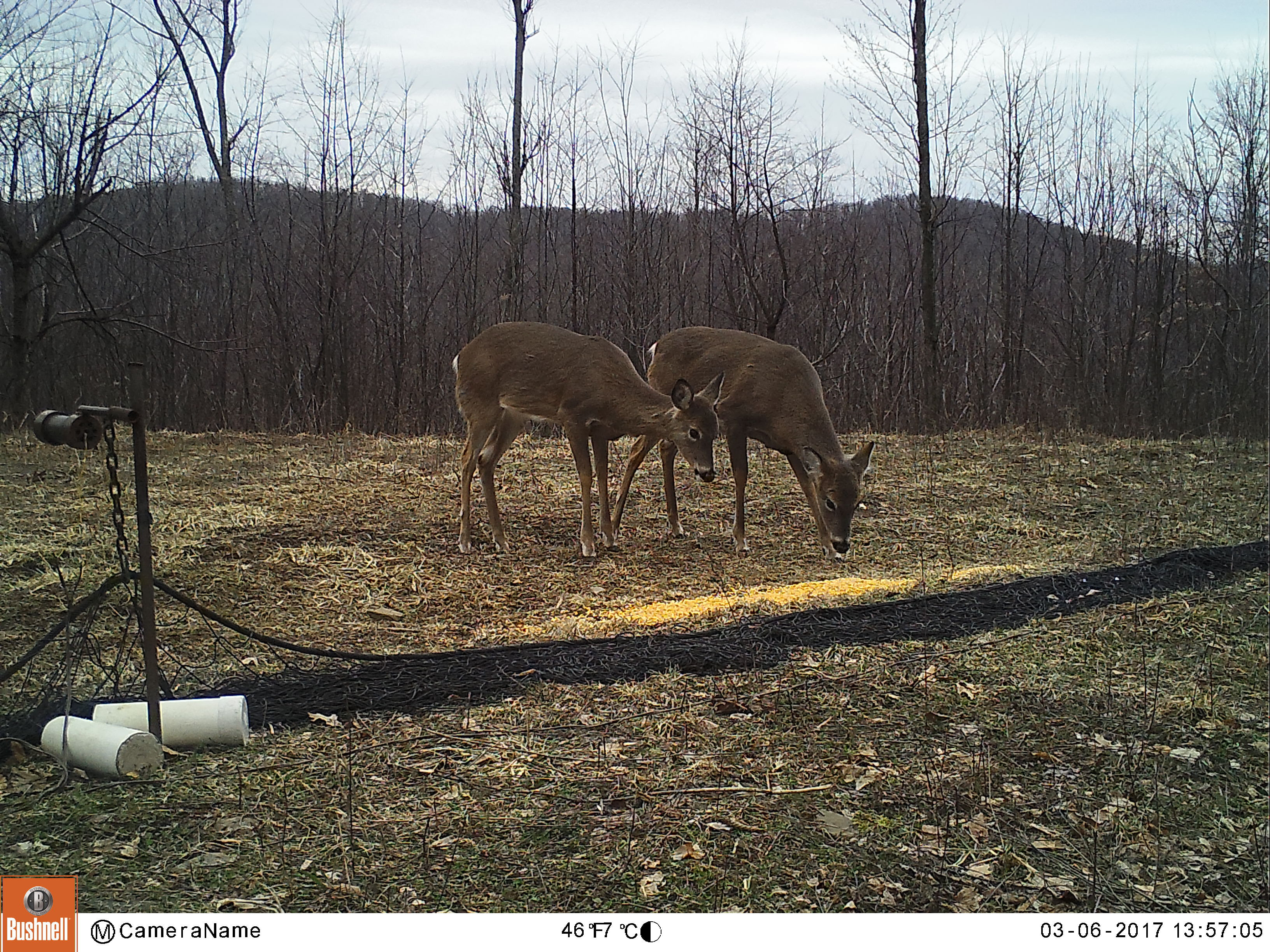 deer at rocket