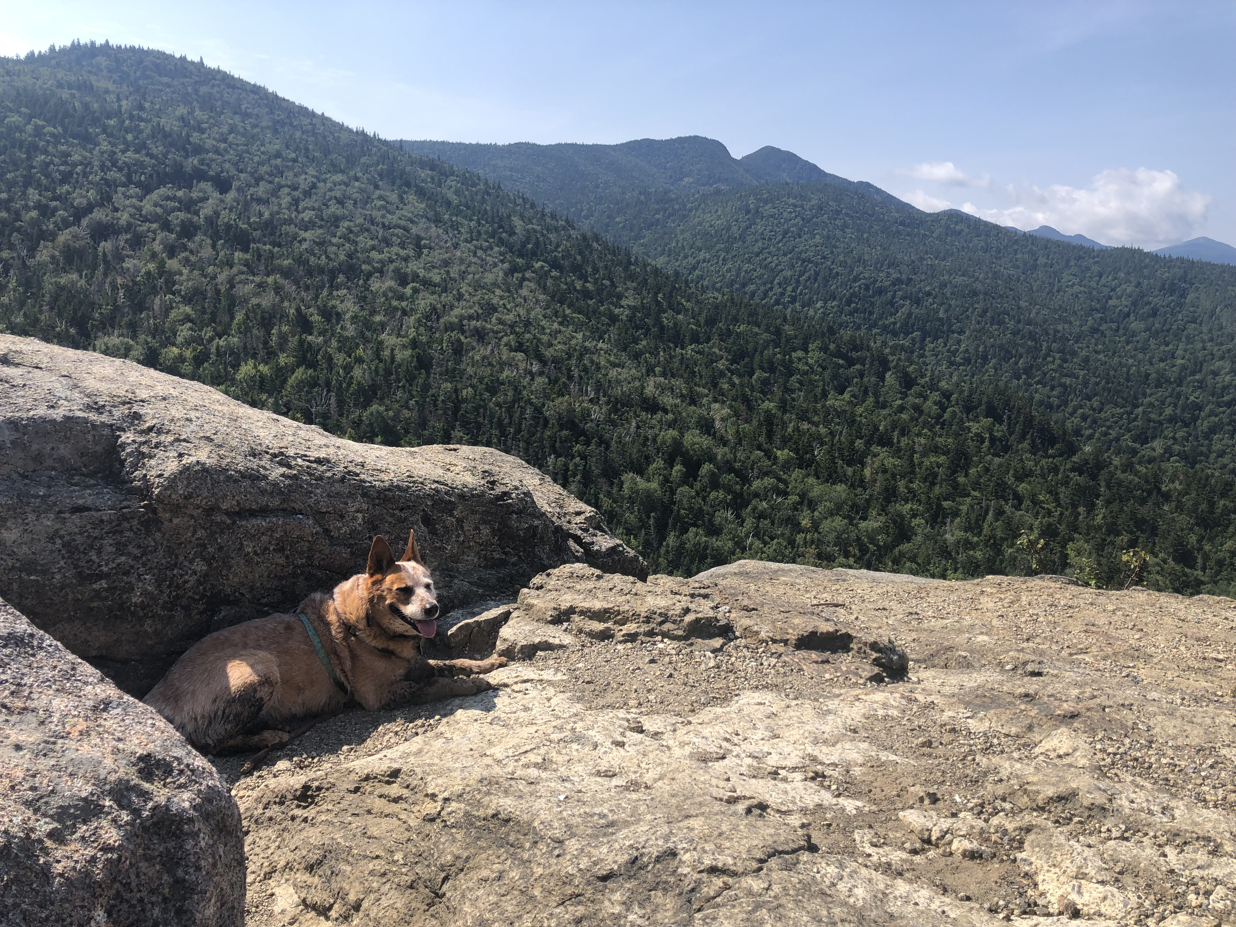 Dog resting in shade of rock on summit with mountain views